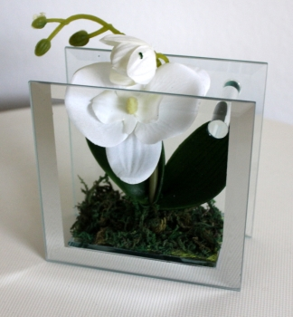 Modern design vase in glass square, incl. Orchid 12x12 cm from Formano